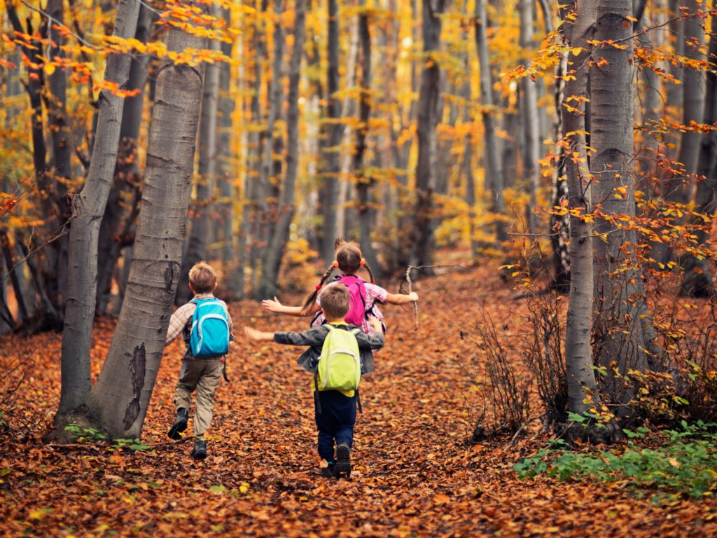 Three kids hiking in autumn beech forest. Kids are wearing backpacks and running.
